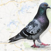 What you need to know about Google's latest update, Pigeon